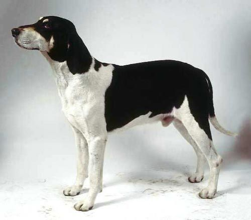 Как называется порода собак черных больших француские
